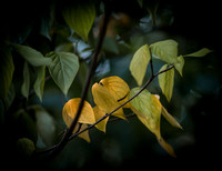 First Leaves and Autumn Flowers primes and Lensbaby 2017