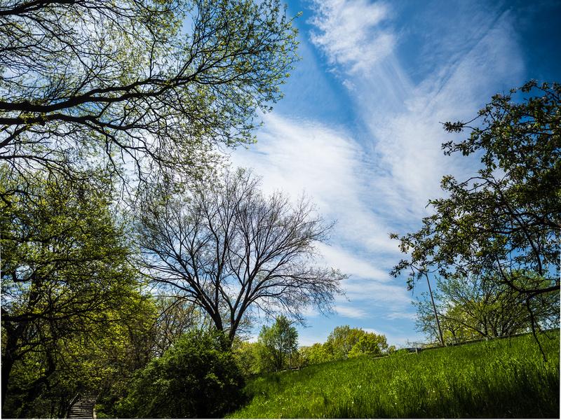 Grren Grass Blue Sky