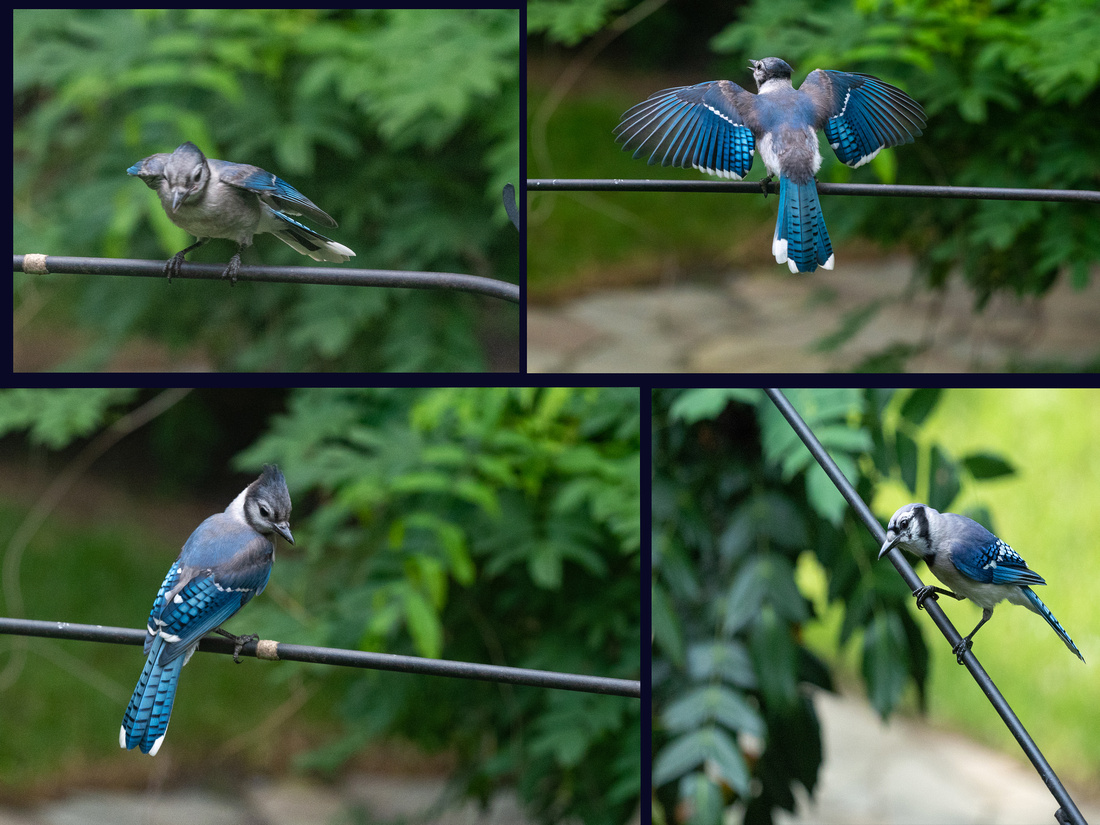 collage with wing spread