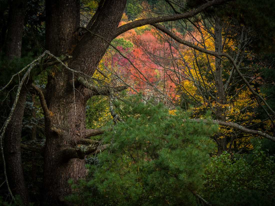 colors in the forest