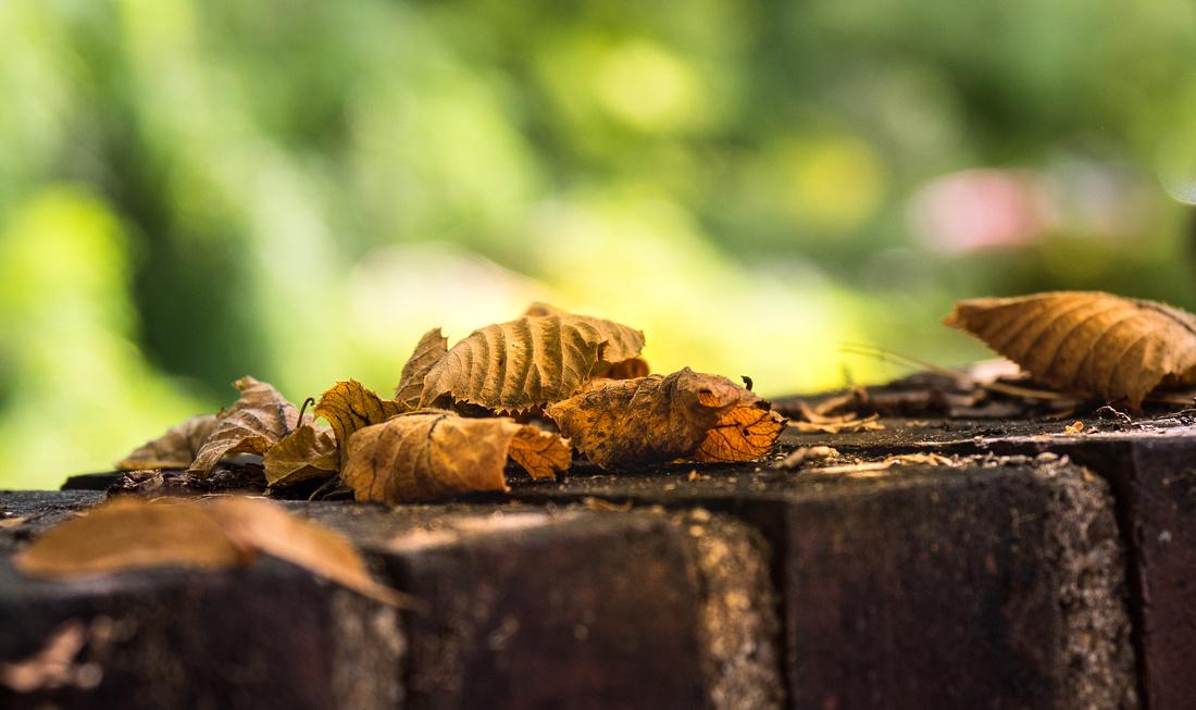 wall leaf cluster