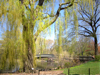 willow and bow bridge