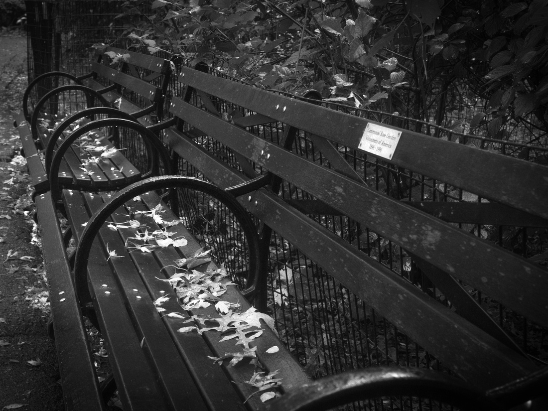 Fallen Leaves on Bench bw copy