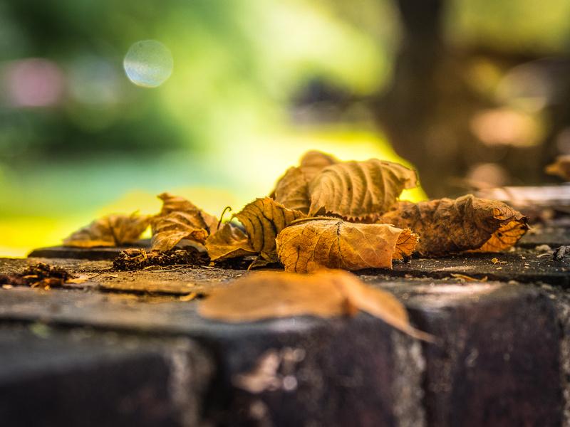 curline leaves